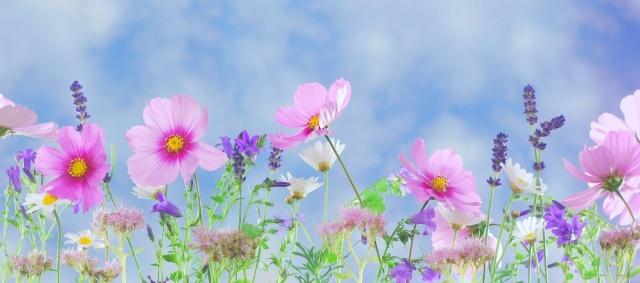 flowers-1497042507msL
