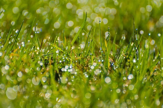 grass-1366969817aOx