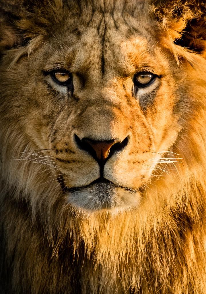 Jesus, Lion of Judah